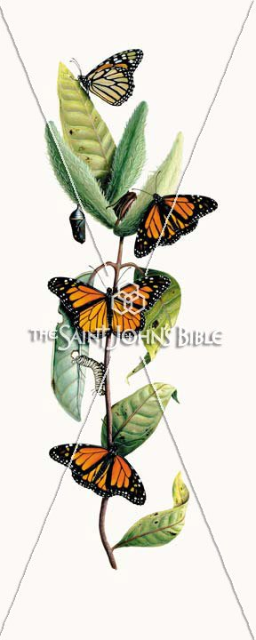 Milkweed And Butterfly: The Shorter and Longer Ending of the Gospel of Mark Featured Print from the Saint John's Bible